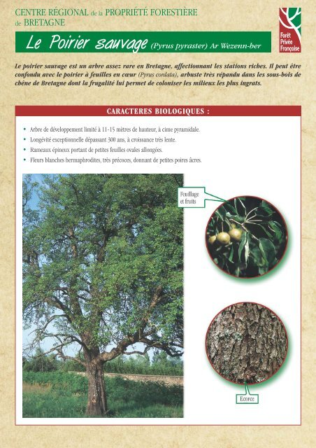 Poirier sauvage - Centres Régionaux de la Propriété Forestière