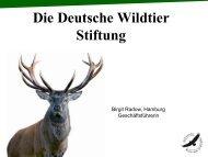 Die Deutsche Wildtier Stiftung - Marketing Club Nürnberg