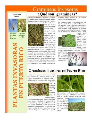 gramíneas invasoras - Puerto DRNA