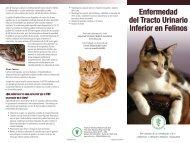 Enfermedad del Tracto Urinario Inferior de los Felinos - American ...