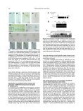 Functional Characterization of Arabidopsis thaliana WRKY39 in ... - Page 4