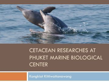Cetacean researches at Phuket Marine Biological Center - fisheries ...