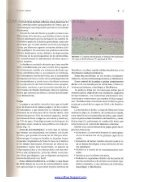 Traumatologia Oral en Odontopediatria: Diagnostico y tratamiento integral - Page 6