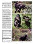 Zaterdag 10 mei - Planckendael - Page 6