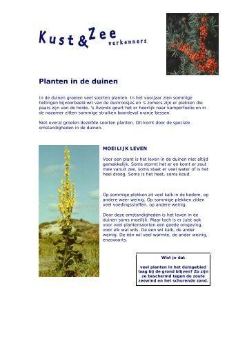 Planten in de duinen - Kustgids.nl