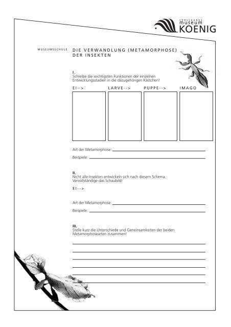 arbeitsblatt metamorphose der insekten pdf 520 kb. Black Bedroom Furniture Sets. Home Design Ideas