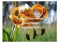 Krytosemenné rostliny Magnoliophyta (Angiospermae)