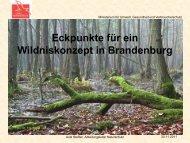 Eckpunkte für ein Wildniskonzept in Brandenburg - NaturSchutzFonds