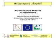 Managementplanung Leitsakgraben - NaturSchutzFonds