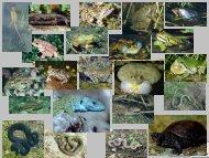 Berücksichtigung von Amphibien und - NaturSchutzFonds