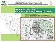 Umsetzung Natura 2000: Managementplanung im Wirtschaftswald