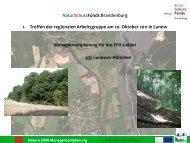 Download Vortrag zur Managementplanung - NaturSchutzFonds ...