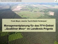 Lampetra planeri - NaturSchutzFonds