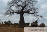 NON-MARINE ALGAE OF AFRICA. A BIBLIOGRAPHY (1799-2010)