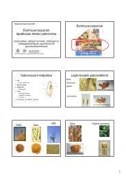Nyálmirigyek intraductalis papilloma, A nyálmirigy jóindulatú daganata - típusok, tünetek, kezelés