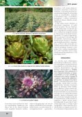 Az articsóka és hazai termesztésének lehetőségei - farmit.hu - Page 2