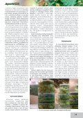Az articsóka és hazai termesztésének lehetőségei - farmit.hu - Page 3