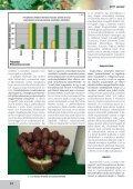 Az articsóka és hazai termesztésének lehetőségei - farmit.hu - Page 4