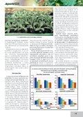 Az articsóka és hazai termesztésének lehetőségei - farmit.hu - Page 5