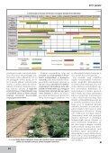 Az articsóka és hazai termesztésének lehetőségei - farmit.hu - Page 6