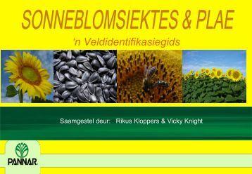Sonneblomsiektes: Klik hier vir die Afrikaanse ... - Landbou.com