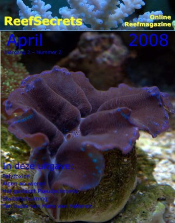 April 2008 - Reefsecrets