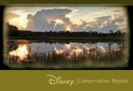 Conservation Report - The Walt Disney Company