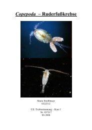 Copepoda – Ruderfußkrebse - StV Biologie Salzburg