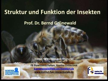 Struktur und Funktion der Insekten I - Institut für Bienenkunde
