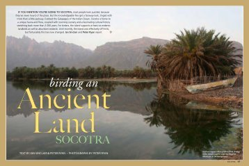 Birding an ancient land: Socotra