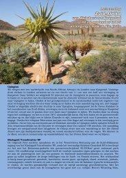 Reisverslag van Kalahari tot Kaapstad - Global Contacts