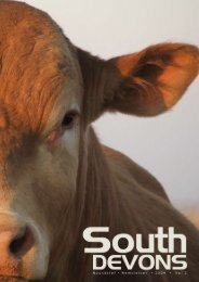southdevon • newsletter • vol 2 • 2 0 0 9 1 - South Devon Cattle ...