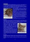 Kleur van de vacht - Vereniging voor de IJslandse Hond - Page 3