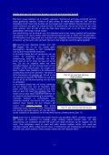 Kleur van de vacht - Vereniging voor de IJslandse Hond - Page 7
