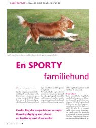 Cavalier king charles spaniel - Hunden
