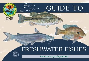 Freshwater Fish Pocket Guide - Department of Natural Resources ...