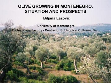 olive growing in montenegro, situation and prospects - EFNCP