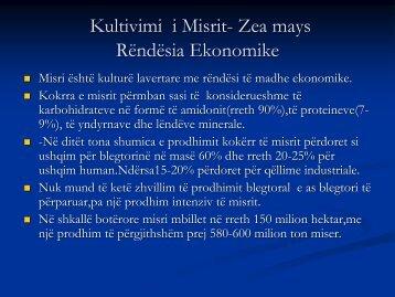 Kultivimi i Misrit- Zea mays Rëndësia Ekonomike