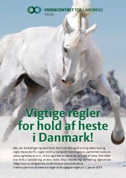 Vigtige regler for hold af heste i Danmark! - LandbrugsInfo