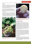 Bakteriese verwelk - Potatoes South Africa - Page 2