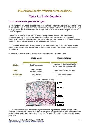 Tema 12. Esclerénquima: definición, origen y función.