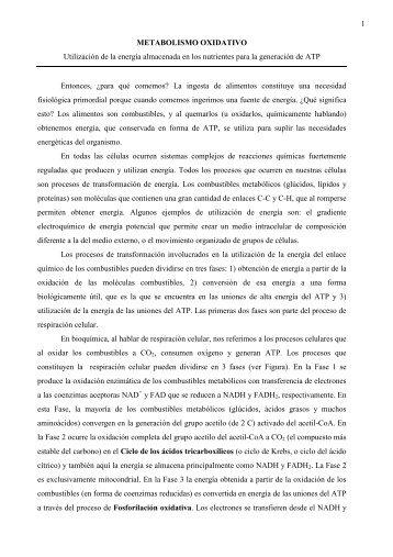 Seminario 11 Ciclo de Krebs-Piruvato deshidrogenasa-Lanzaderas