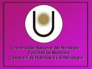 material iconográfico - Facultad de Medicina - Universidad Nacional ...