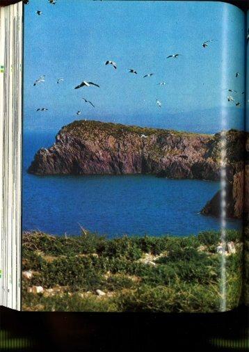 La gaviota de Audouin (Larus audouinii) en las Islas Chafarinas