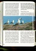 La gaviota de Audouin (Larus audouinii) en las Islas Chafarinas - Page 5