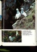 La gaviota de Audouin (Larus audouinii) en las Islas Chafarinas - Page 6