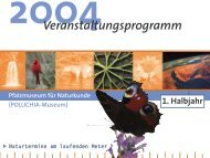 Veranstaltungsprogramm 1. Halbjahr 2004 - Pfalzmuseum für ...