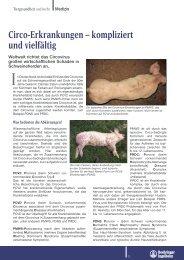 Circo-Erkrankungen - Tiergesundheit und mehr
