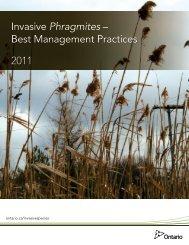 Invasive Phragmites – Best Management Practices 2011