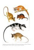 phylogenetic relationships and classification of didelphid marsupials ... - Page 2